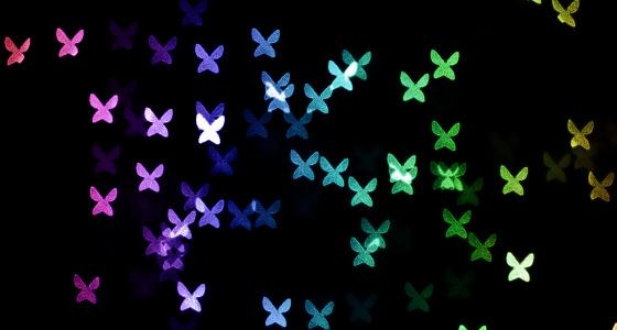 Nov18-14-butterflies-transday